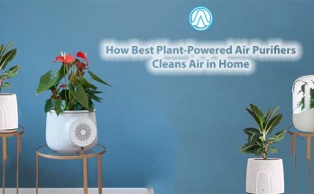 How Best Plant-Powered Air Purifiers Cleans Air