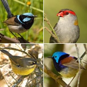 birds-composite