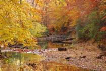 Fall Foliage on the Quantico Creek