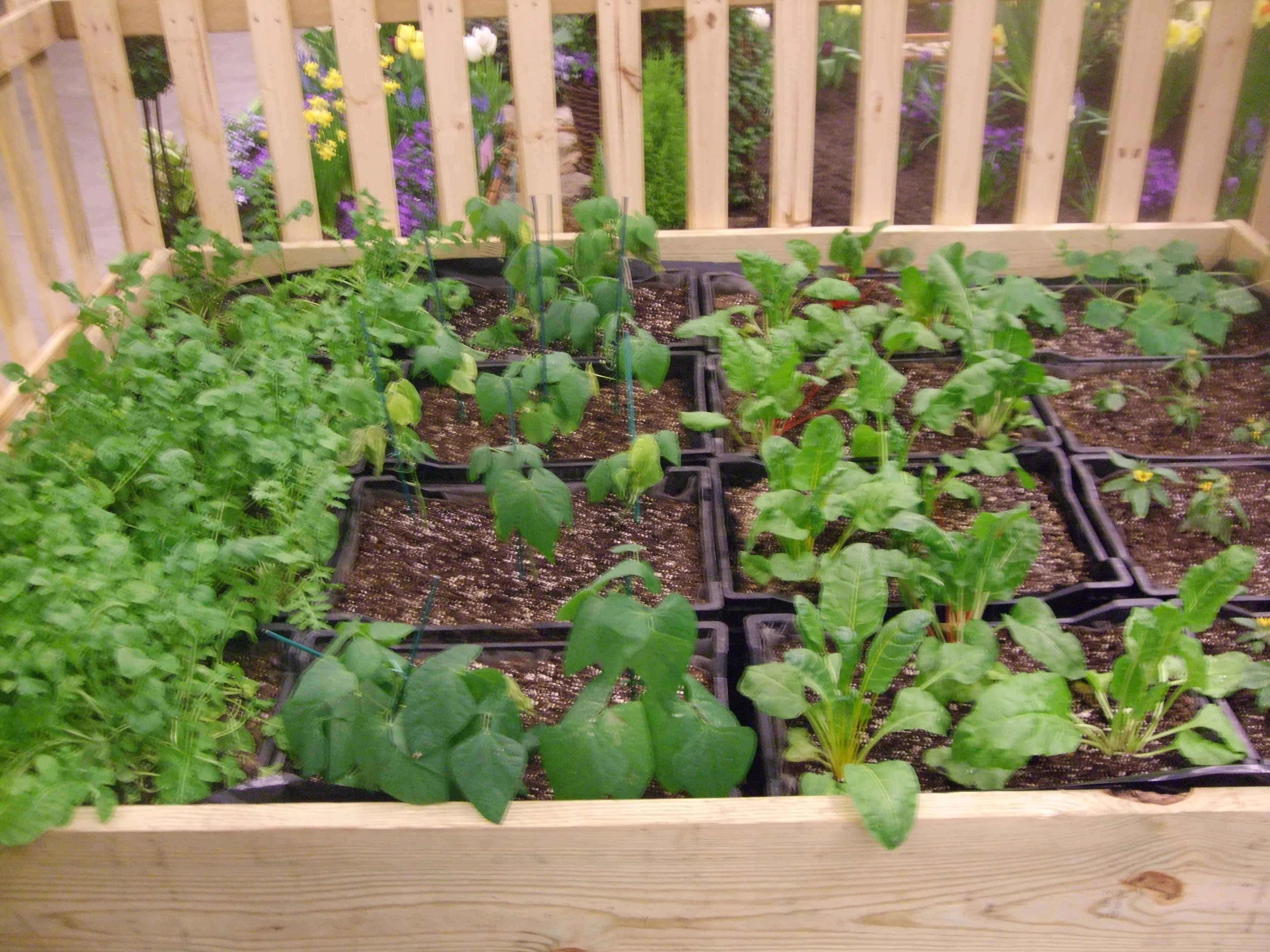 gardening in a milk crate is pretty much the same idea as square foot gardening its kind of amazing what you can grow in these happy little plastic boxes - Milk Crate Garden