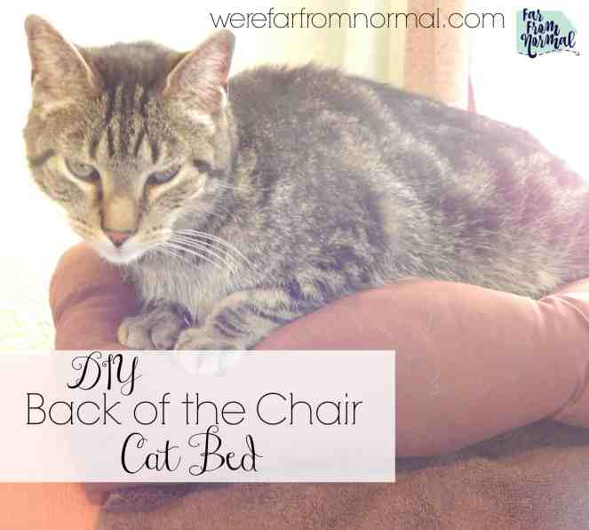 Does your cat lay on the back of the chair or couch This easy to make bed will keep them comfy and protect your furniture!