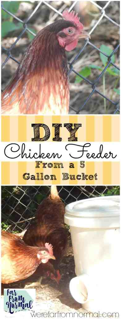Looking for a low maintainance chicken feeder This is so easy to make and will keep your chickens fed and happy!