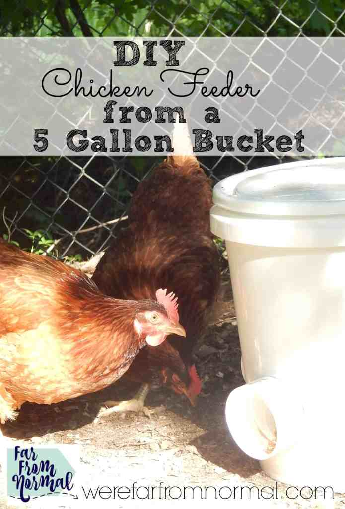 DIY Chicken Feeder (from a 5 gallon bucket!)