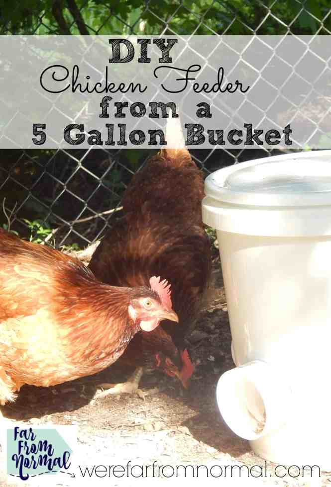 Make your life as a chicken keeper easier! This bucket chicken feeder is made with a 5 gallon bucket and pvc pipe it is super easy and so convenient.