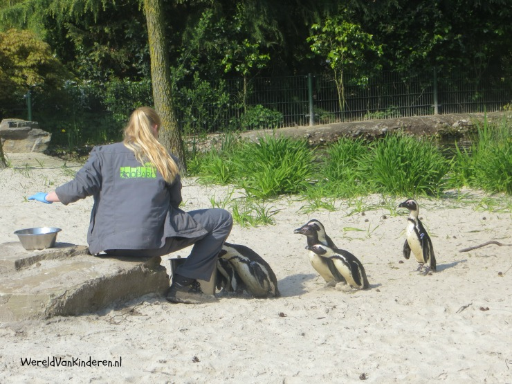 Expeditie Zooparc (2)