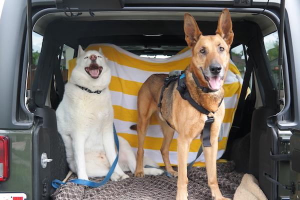 Dog Harness Review Help 39Em Up vs Ruffwear Web Master