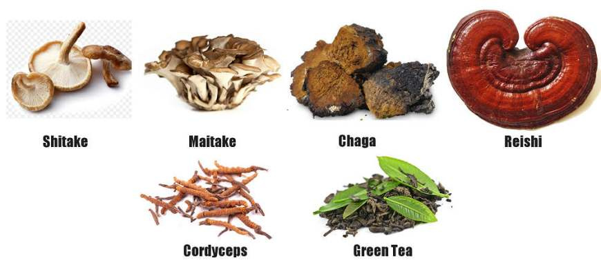 cordyceps extract benefits