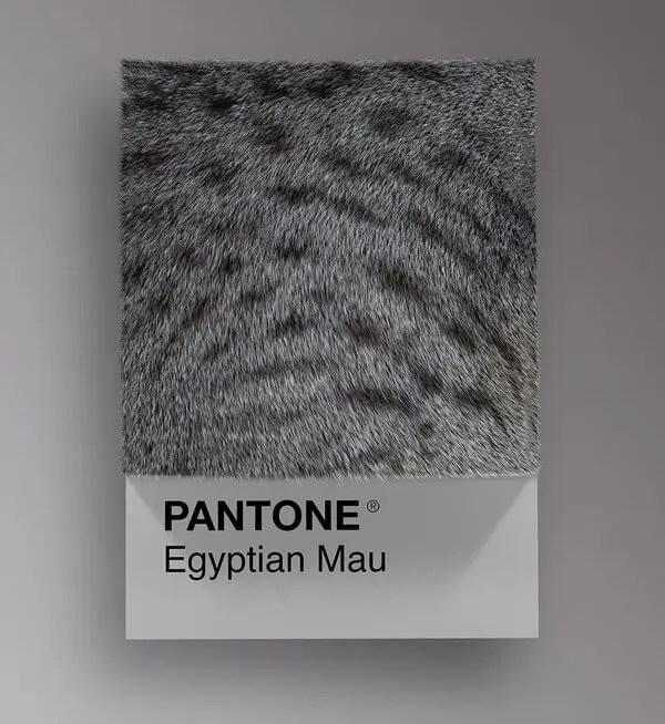 wersm-CAT-BREEDS-AS-PANTONE23