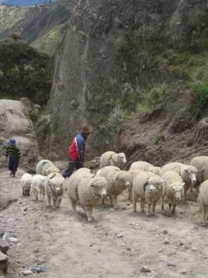 Ecuador 2010 129