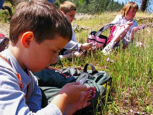 Little boy looking at flowers through a magnify glass