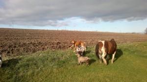 agroturystyka - pies, koń