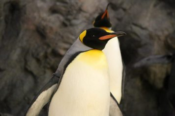 St Louis Zoo-2978