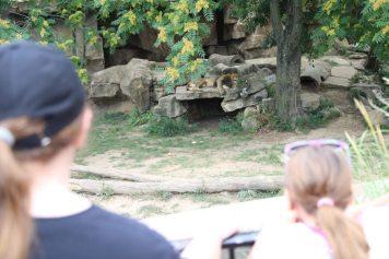 St Louis Zoo-3048