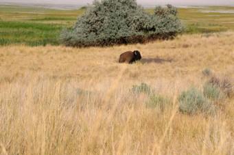 Antelope Island-0562