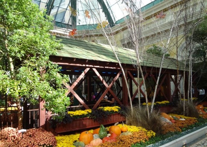 Bellagio Conservatory-05385
