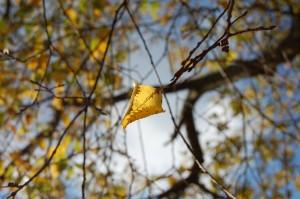 olivia leaf
