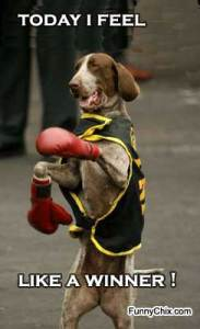 funny-pictures-boxing