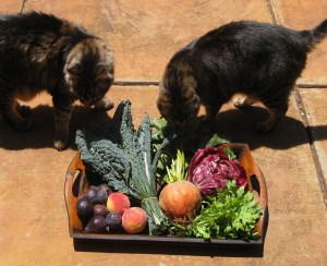 cats-and-veggies