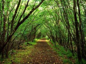 oakleaf-forestry