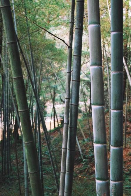 Nanming Shan