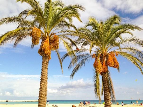 cudowne palmy