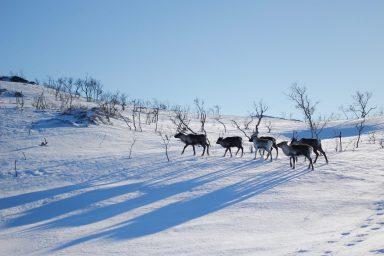 Tromso okolice zwiedzanie atrakcje