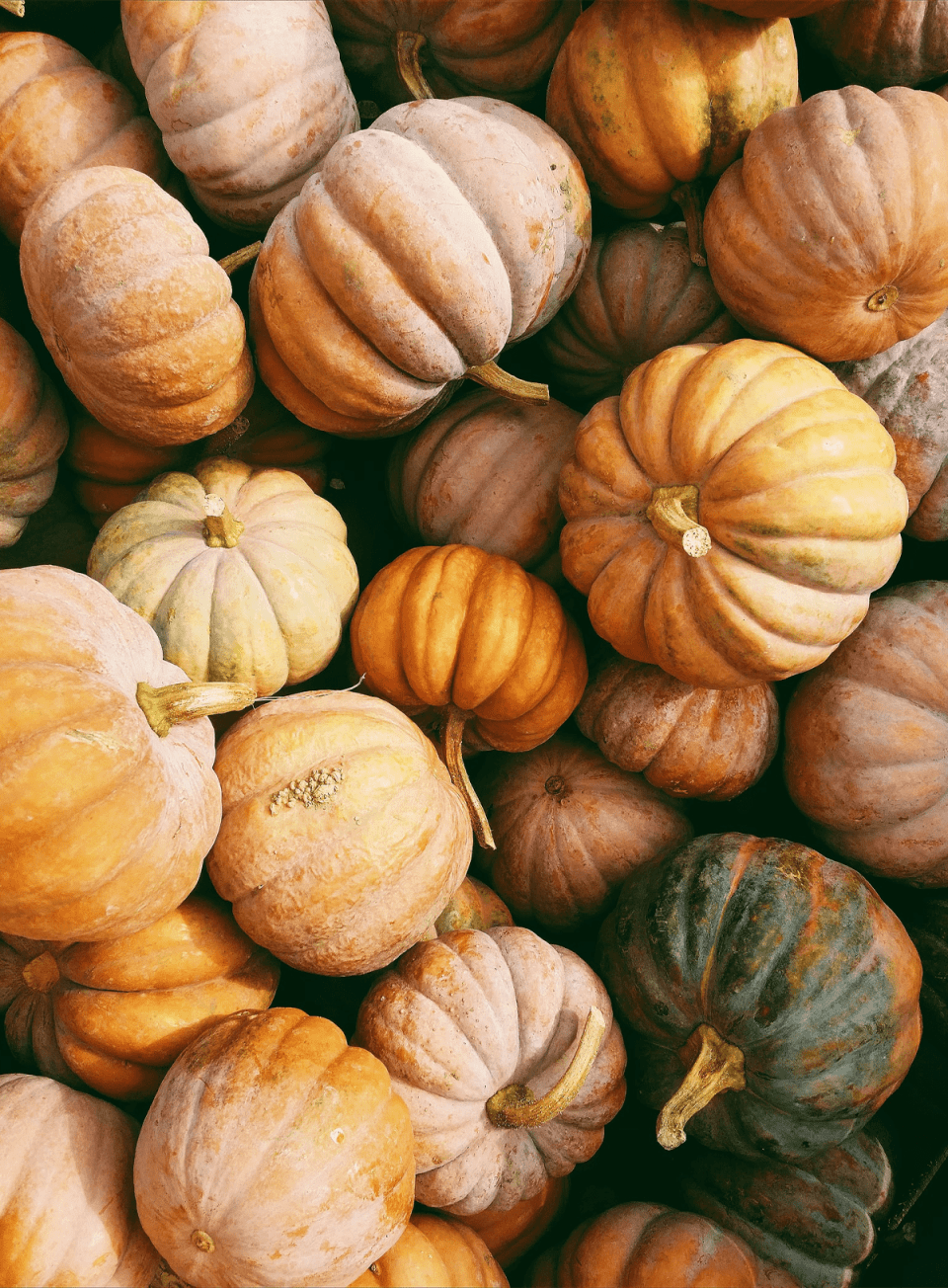 an over photo of a pile of picturesque small pumpkins of all shapes and sizes