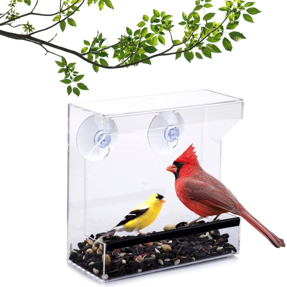 window bird feeder with two birds perched inside