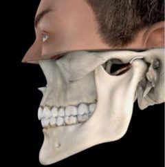 TMJ TMD Temporomandibular Joint
