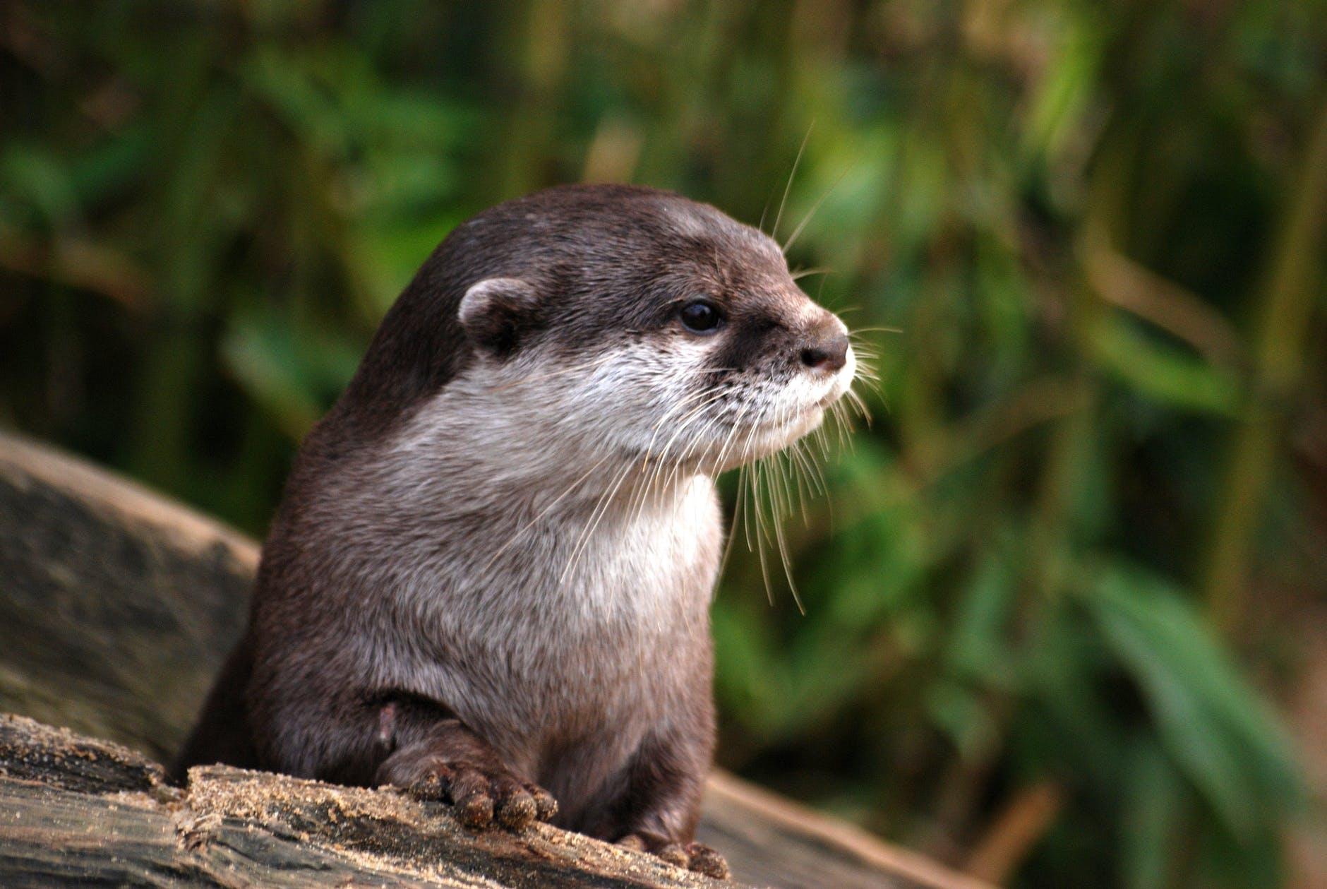 nature animal cute fur