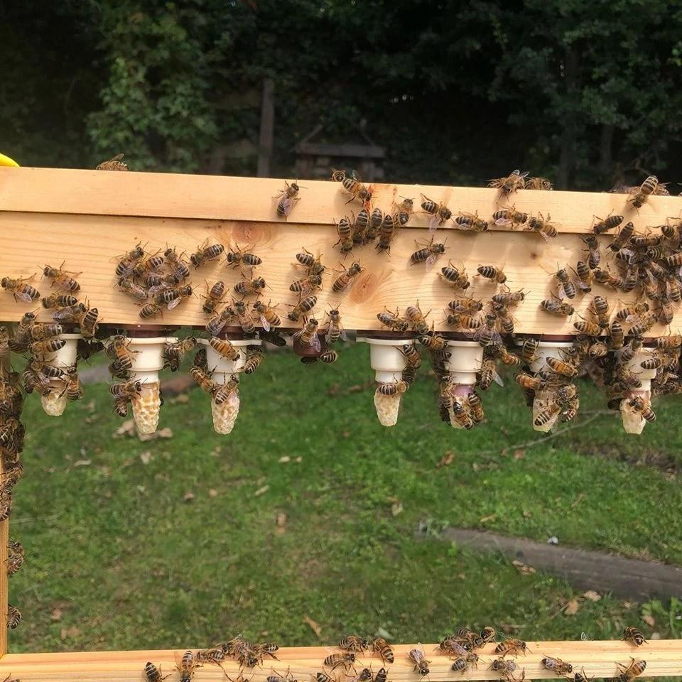 Ben's Berkshire Bees