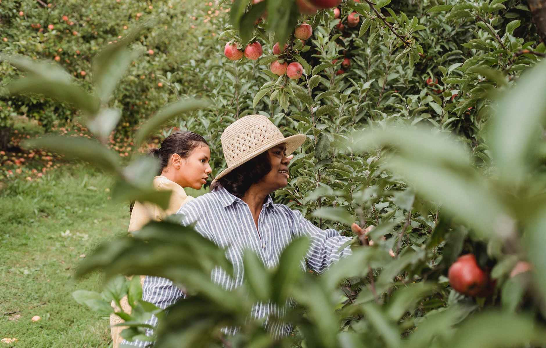 ethnic mother harvesting fruits in green orchard