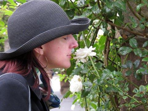 30204-Roses