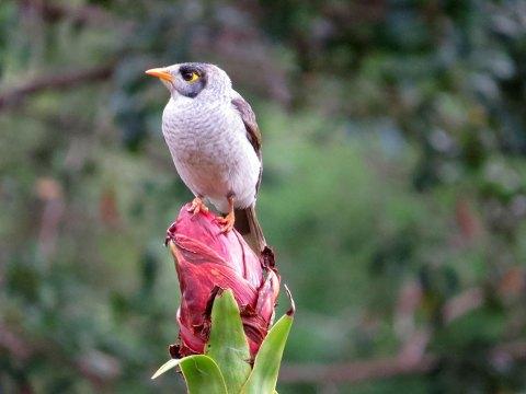30205-Finch