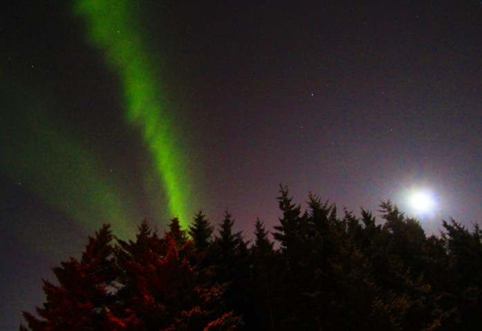 icelandnorthernlightstrees