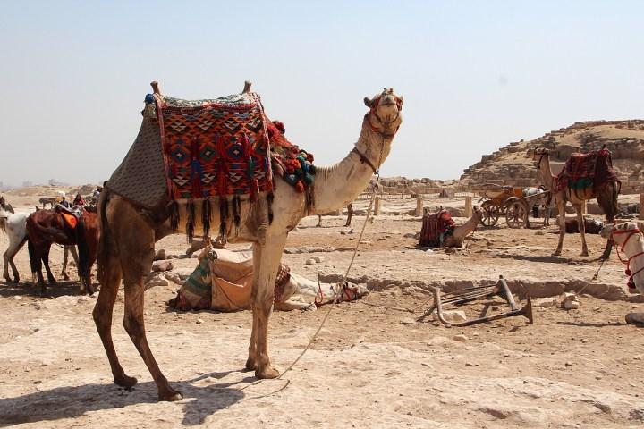 Cairo29