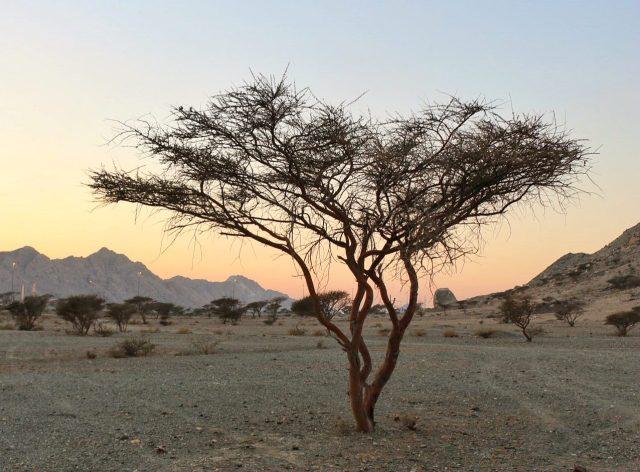 Hatta UAE