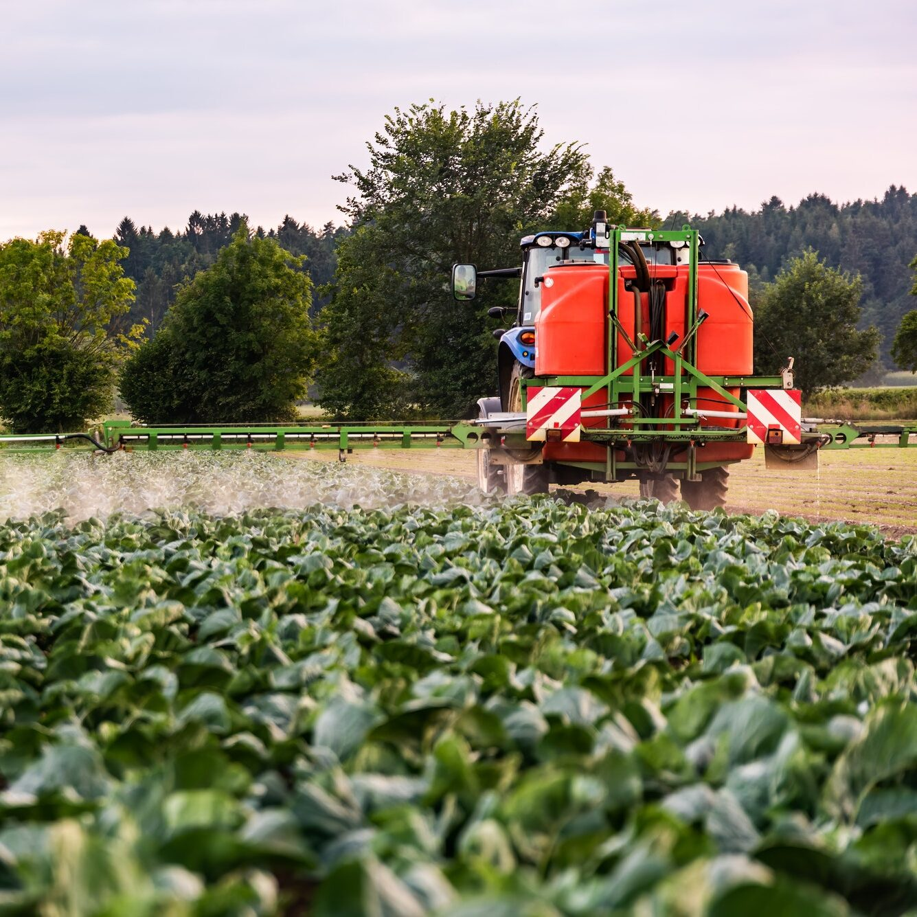 Tractor spraying pesticides on cabbage field