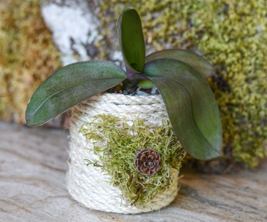 DIY-rope-wrapped-planter-craft-project-for-staging-2