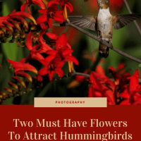 Two Must Have Flowers To Attract Hummingbirds To Your Yard