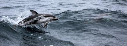 MikeLastinger_Dolphins1