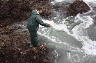 Coastal Ecologist Steven Fradkin taking a sample with a Niskin bottle at Sokol Point, ONP. Photo credit: Andy Hokit; NPS