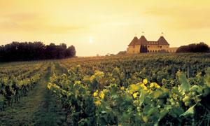 CE Signature-Winery