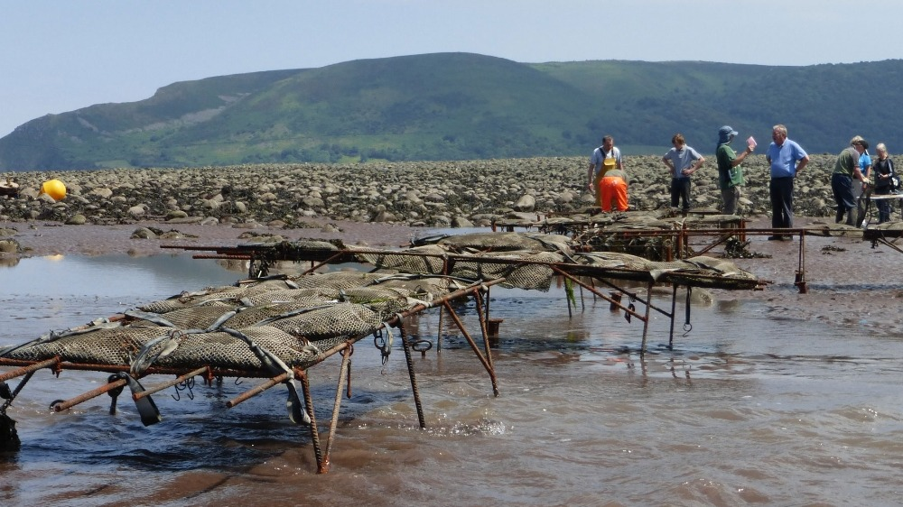 Oyster trestle fabricated for the Porlock Bay Oysters by West Country Blacksmiths.
