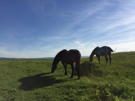 Grazing horses on the walk into town