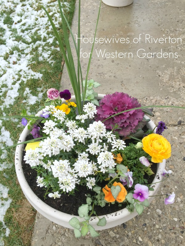 8 Tips for planting early spring flower pots, to help pull your yard out of the winter blues and into the happy colors of spring!