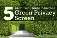 How to Create a Green Privacy Screen - Western Garden Centers