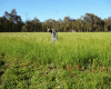 Farmer standing in paddock.