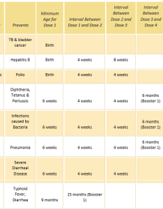 Baby vaccination schedule know all about indian immunization also chart download business mentor rh westernmotodrags