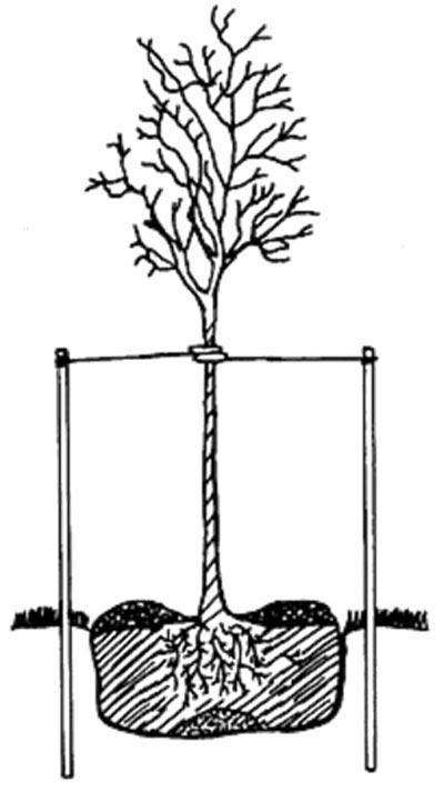 Diagram Directory Tree Diagram